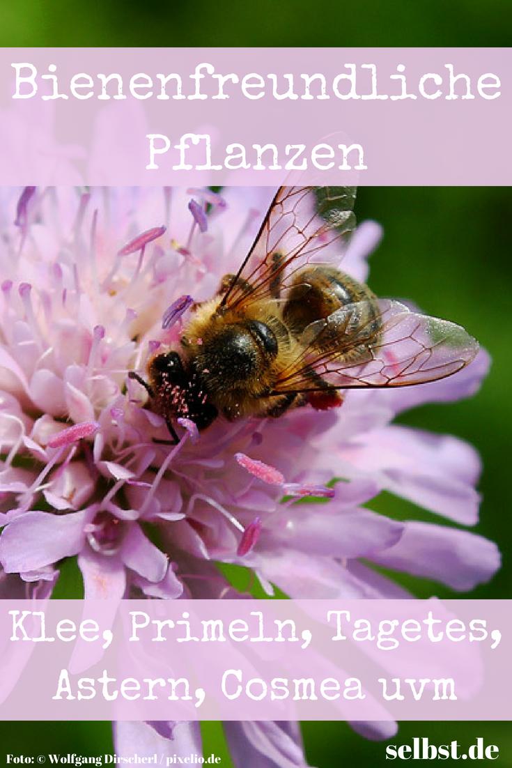 Bienenfreundliche Pflanzen Blumen Pflanzen Gemuse Pinterest