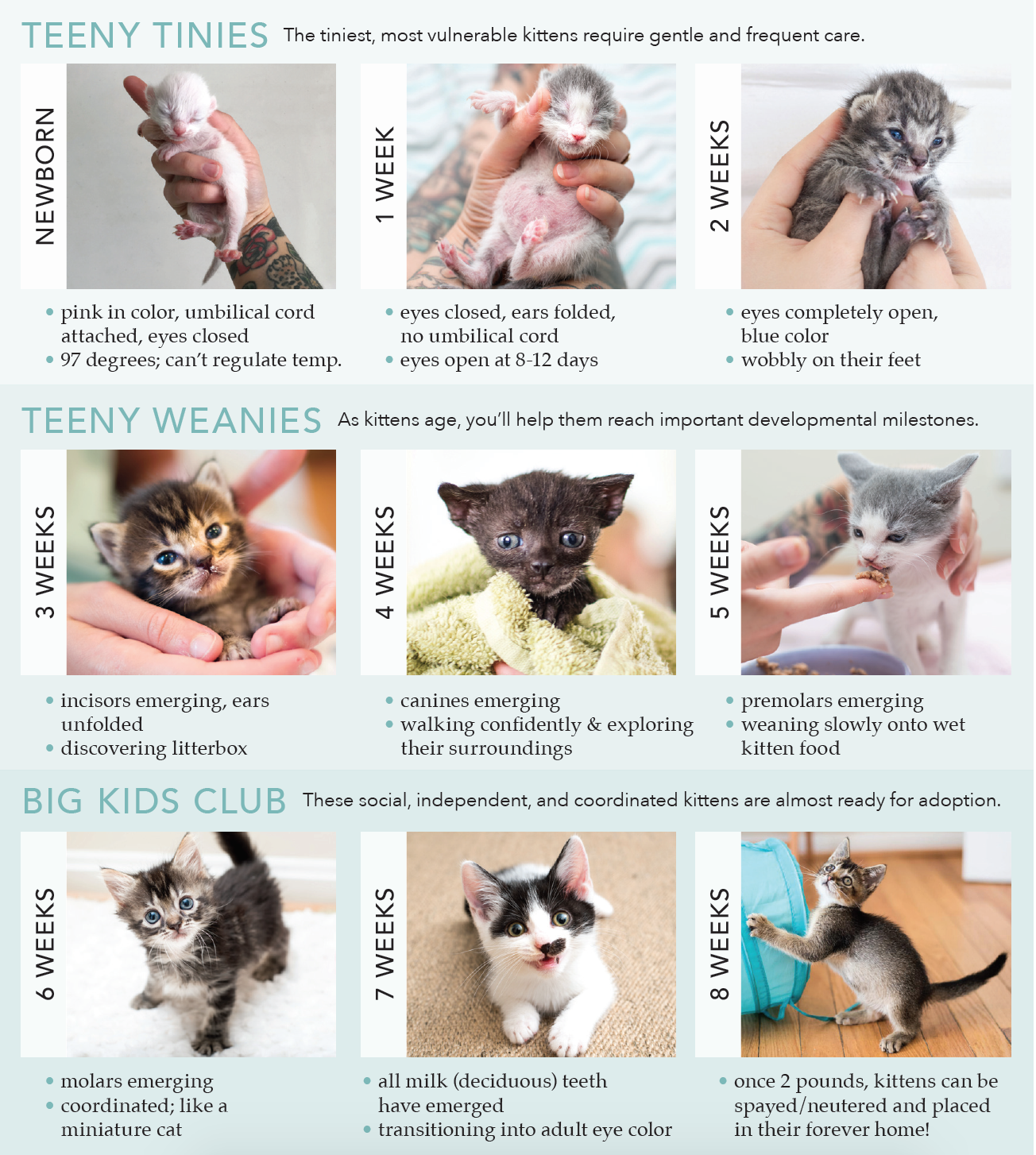 Screen Shot 2017 05 01 At 10 28 48 Am Png Kitten Care Kitten Care Newborn Baby Kittens