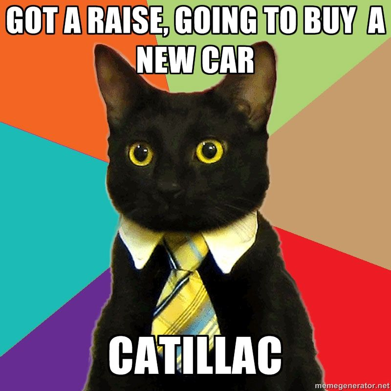 6716a8fc8a672f0c64469b28b354f8d7 business cat via meme generator some fun pinterest