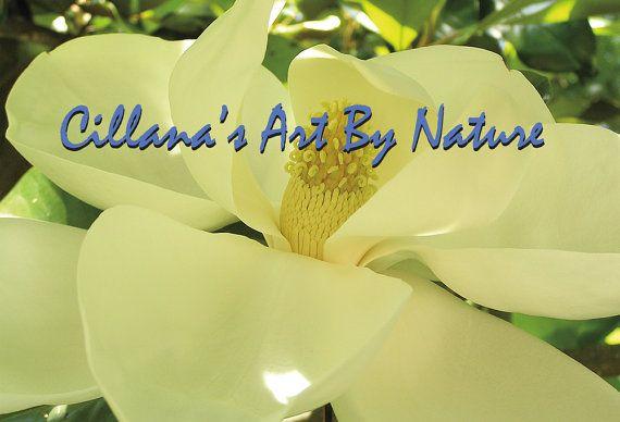 Southern Magnolia Bloom Louisiana State By Cillanasartbynature 2 00 Southern Magnolia Magnolia Southern Magnolia Tree