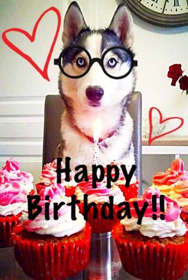 Happy Birthday Husky : happy, birthday, husky, Happy, Birthday, Husky!!, 🎂😃🎉🎶😆, Lovers, Birthday,, Animals,