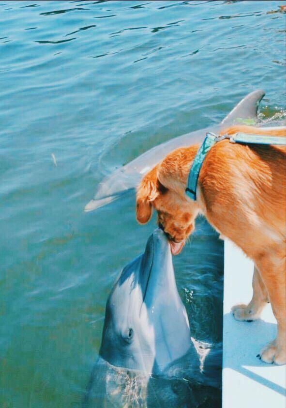 Good Doggos By Jennifer Nichole Pets Cute Animals Cute Funny