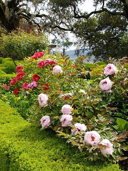 Theme Gardens   Estates   Michael Bates - English Country Garden ...