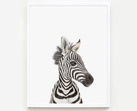 Baby Zebra Little Darling Print Animal Print Shop Baby Zebra