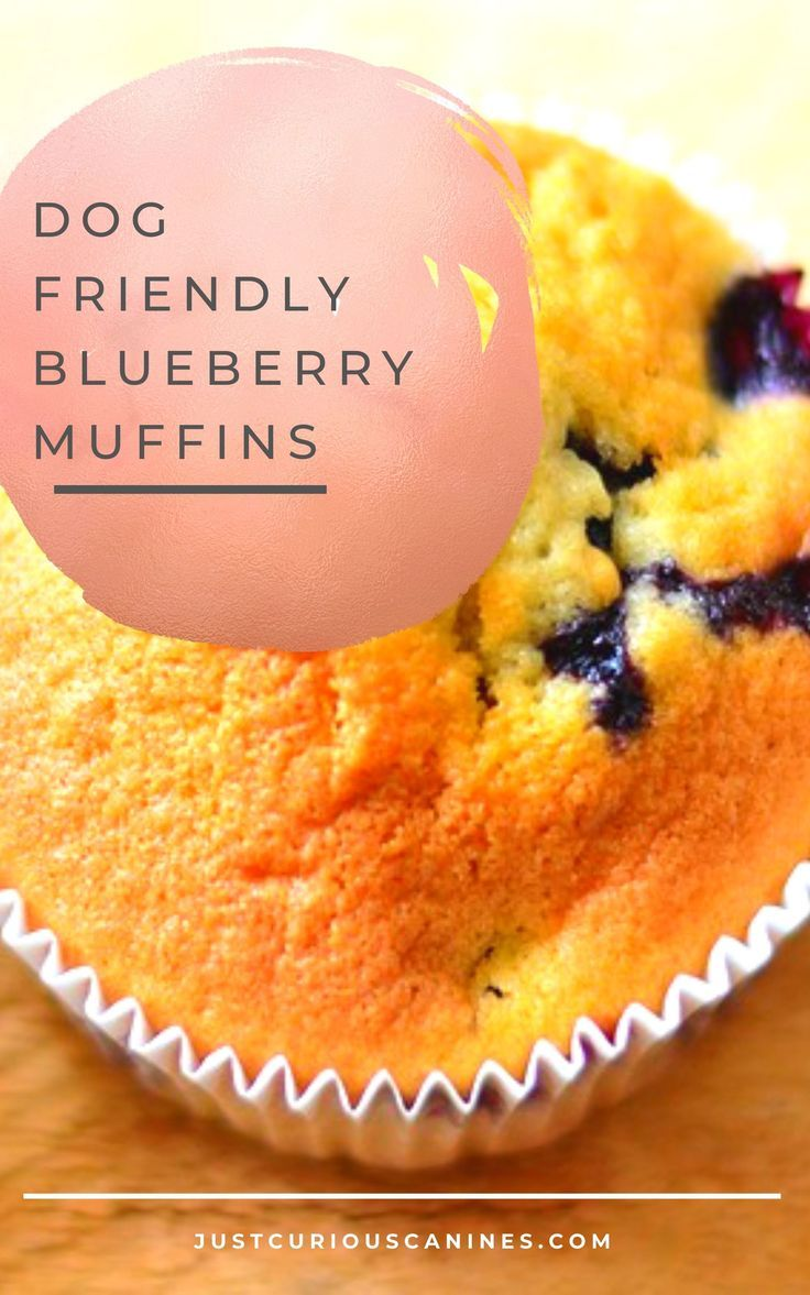 Dogfriendly blueberry muffin recipe with images raw