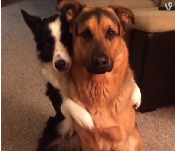 Adorable Video Of Dog Hugging Bff Goes Viral Dogs Hugging Cute