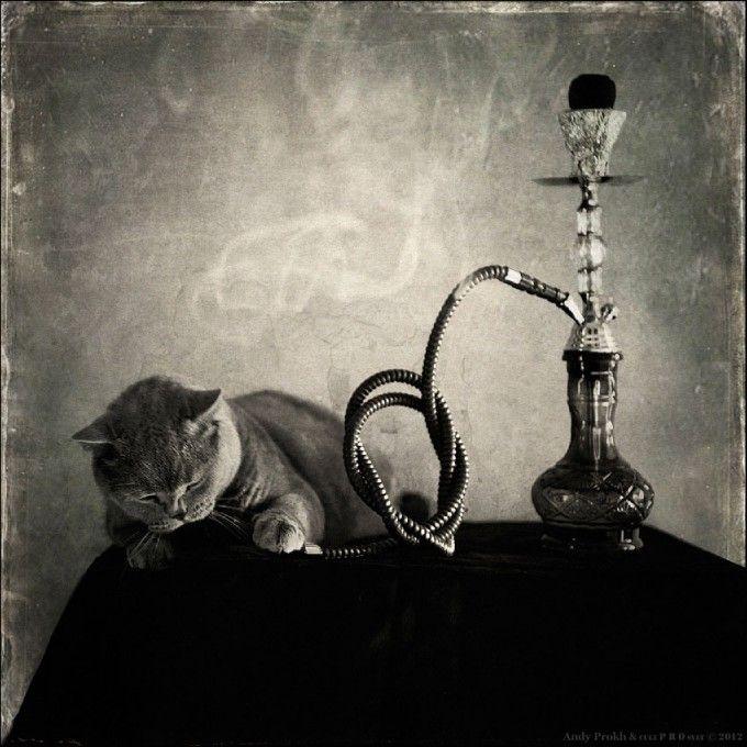 Hookah Smoker Photo By Photographer Andy Prokh Hookah Cats