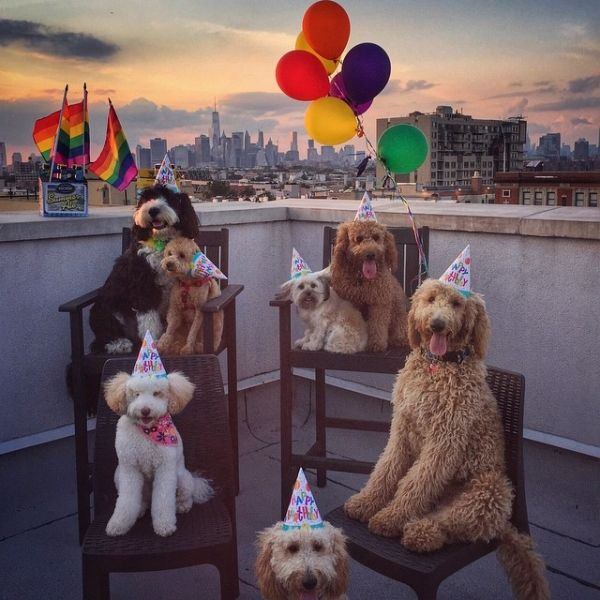 15 Craigslist Ads A Crazy Dog Person Would Totally Write Maybe Happy Dogs Dog Party York Dog