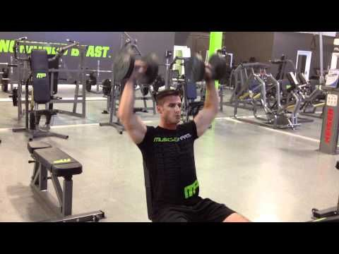 Arnold blueprint to cut phase 1 shoulders musclepharm toys arnold blueprint to cut phase 1 shoulders musclepharm malvernweather Images