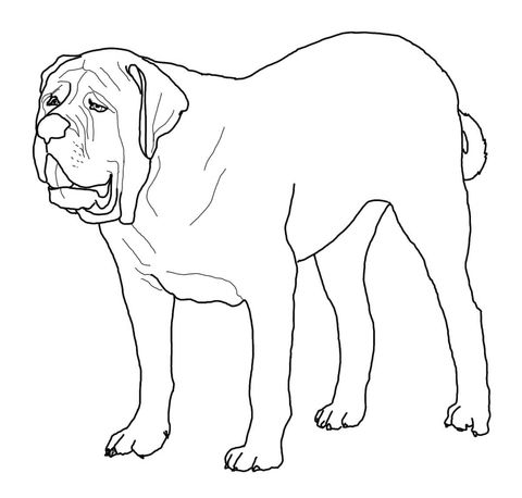 English Mastiff coloring page from