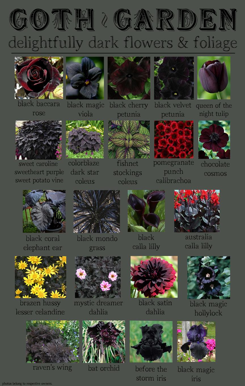 Superieur Goth Garden | Delightfully Dark Flowers U0026 Foliage.