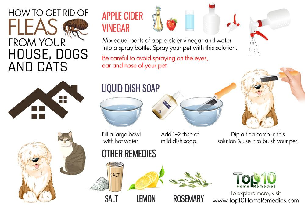 How To Get Rid Of Fleas From Your House Dogs And Cats Top 10 Home Remedies Dog Flea Remedies Flea Remedies Cat Fleas