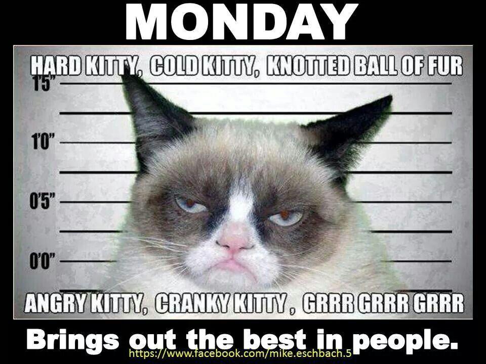 i hate mondays tarder sauce the grumpy cat pinterest