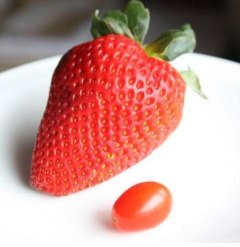 100pcs Seeds Strawberry Bonsai Plant House Garden