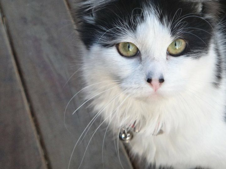 Jelly Cat | Pawshake