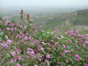 Free Plant Identification Planting flowers, Mojave