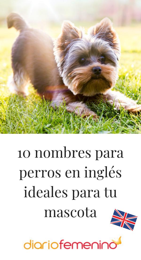 10 Nombres Para Perros En Inglés Ideales Para Tu Mascota Nombres De Perros Nombres Para Perro Hembra Nombres De Perro Hembra