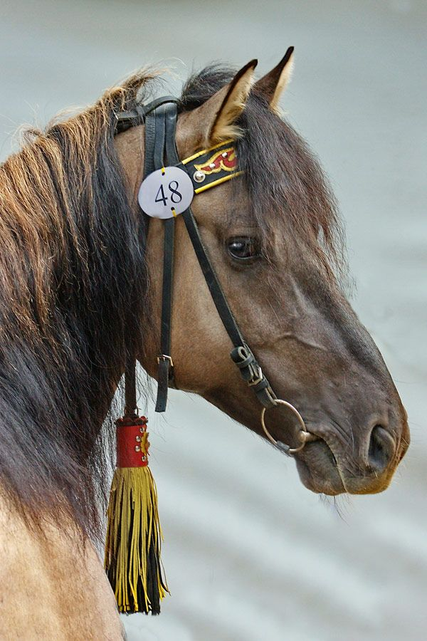 Vyatskay is a breed of horse from Russia.