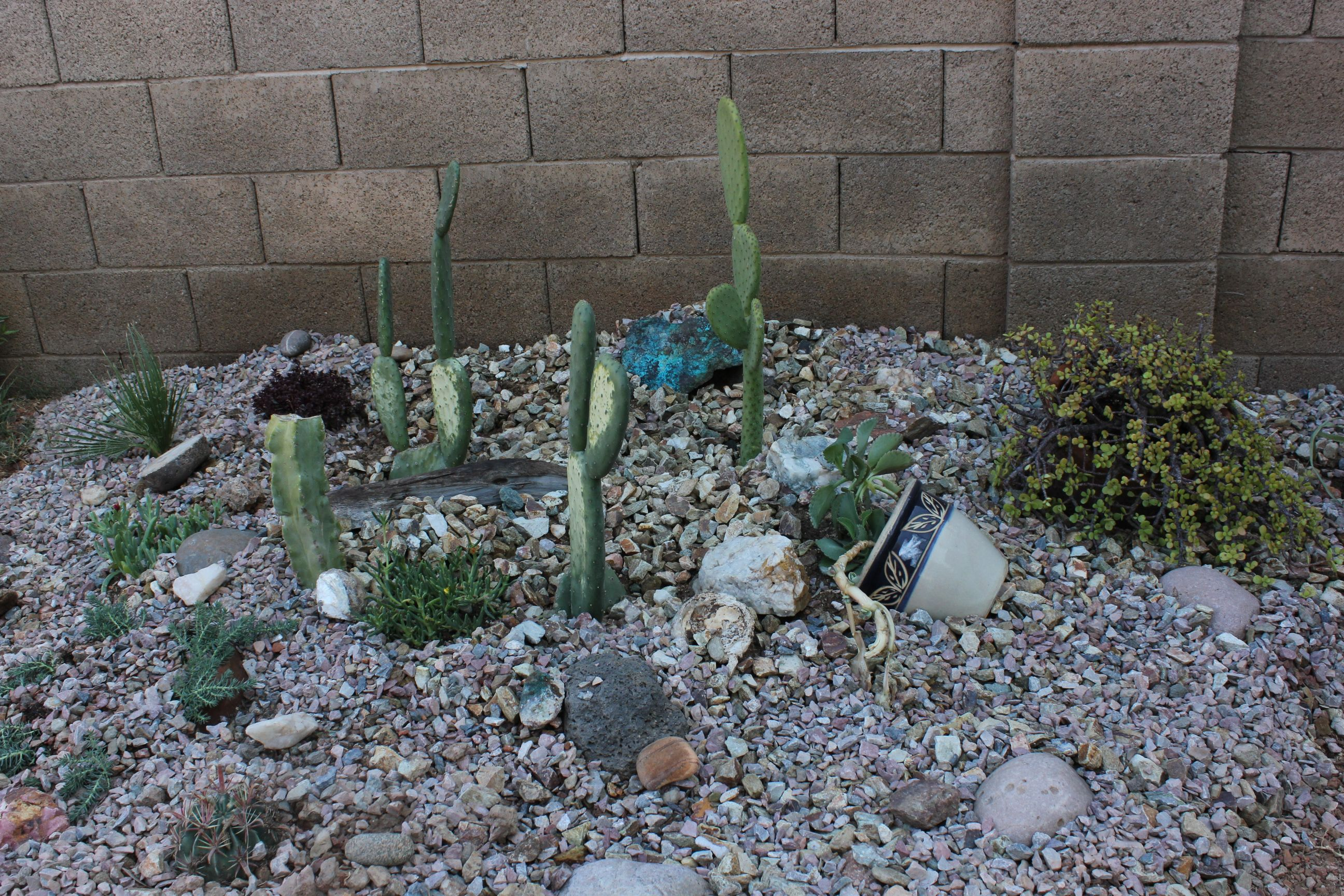 Building a cactus garden in the backyard
