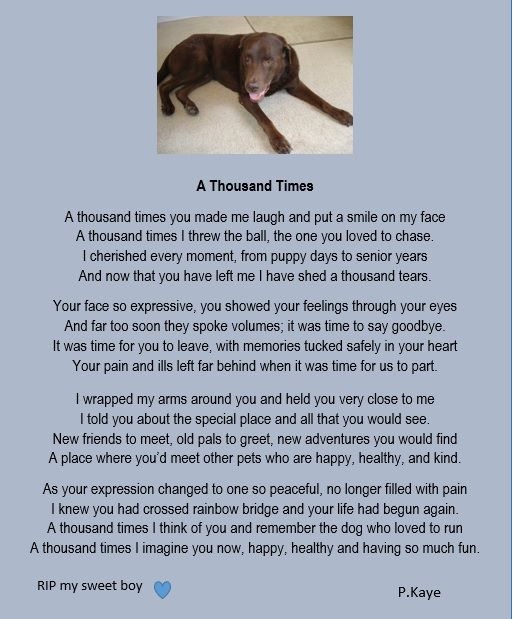 Two Years Ago Today Couper Crossed Rainbow Bridge You Are Forever In My Heart Pet Grief Dog Poems Pet Poems