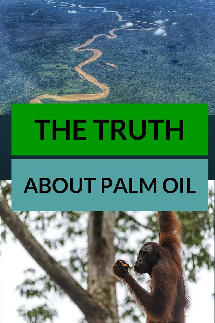 The Horrible Truth about Palm Oil Wildlife travel, Palm