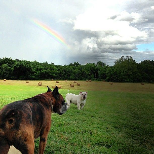 Rainbow, and 2 dogs..........