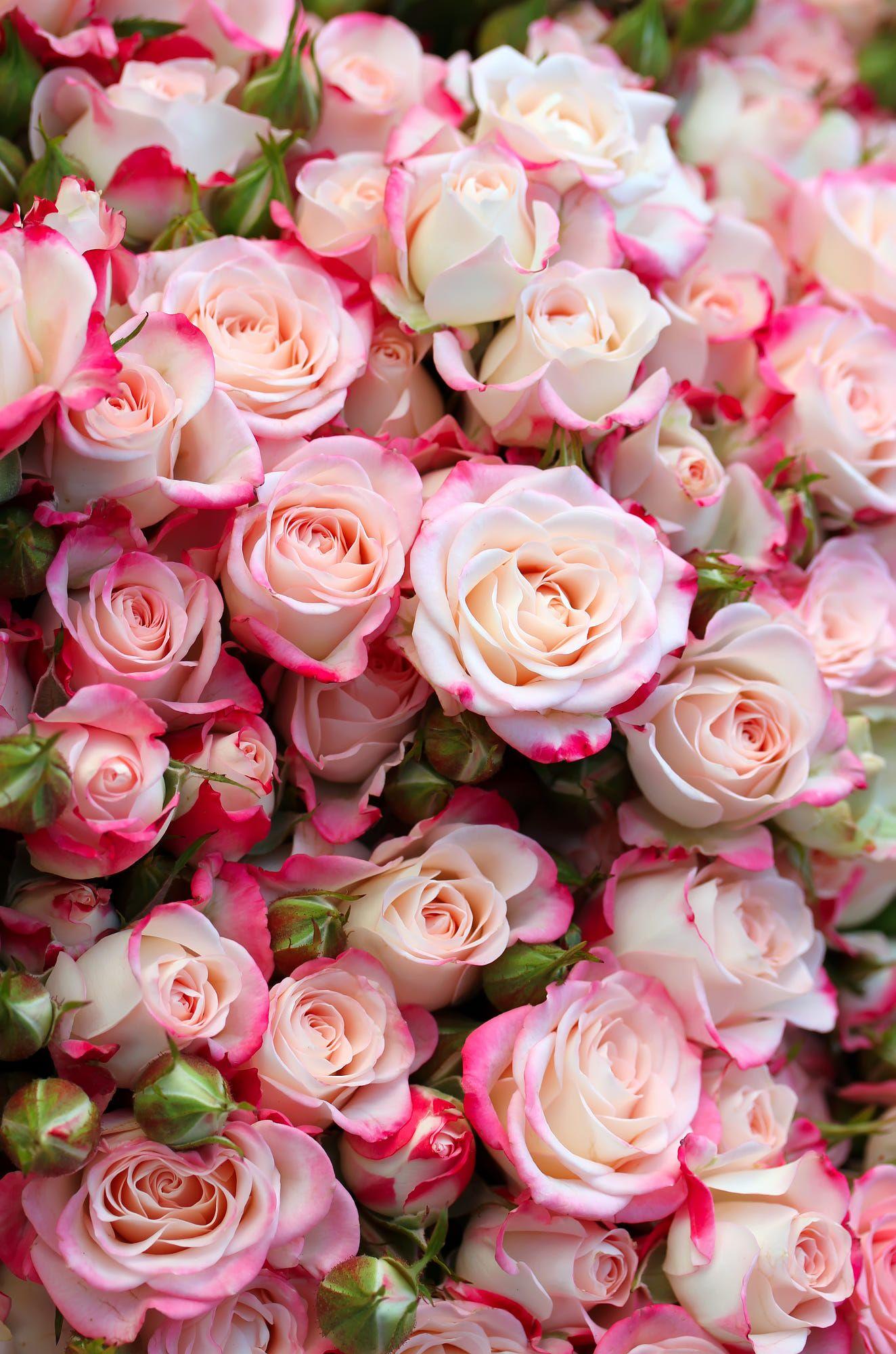 Красивые фото цветов в хорошем качестве