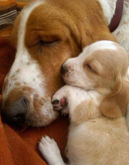 Everyone Needs Their Mom Once In A While More At Megacutie Co Uk With Images Cute Animals Cute Dogs Puppies