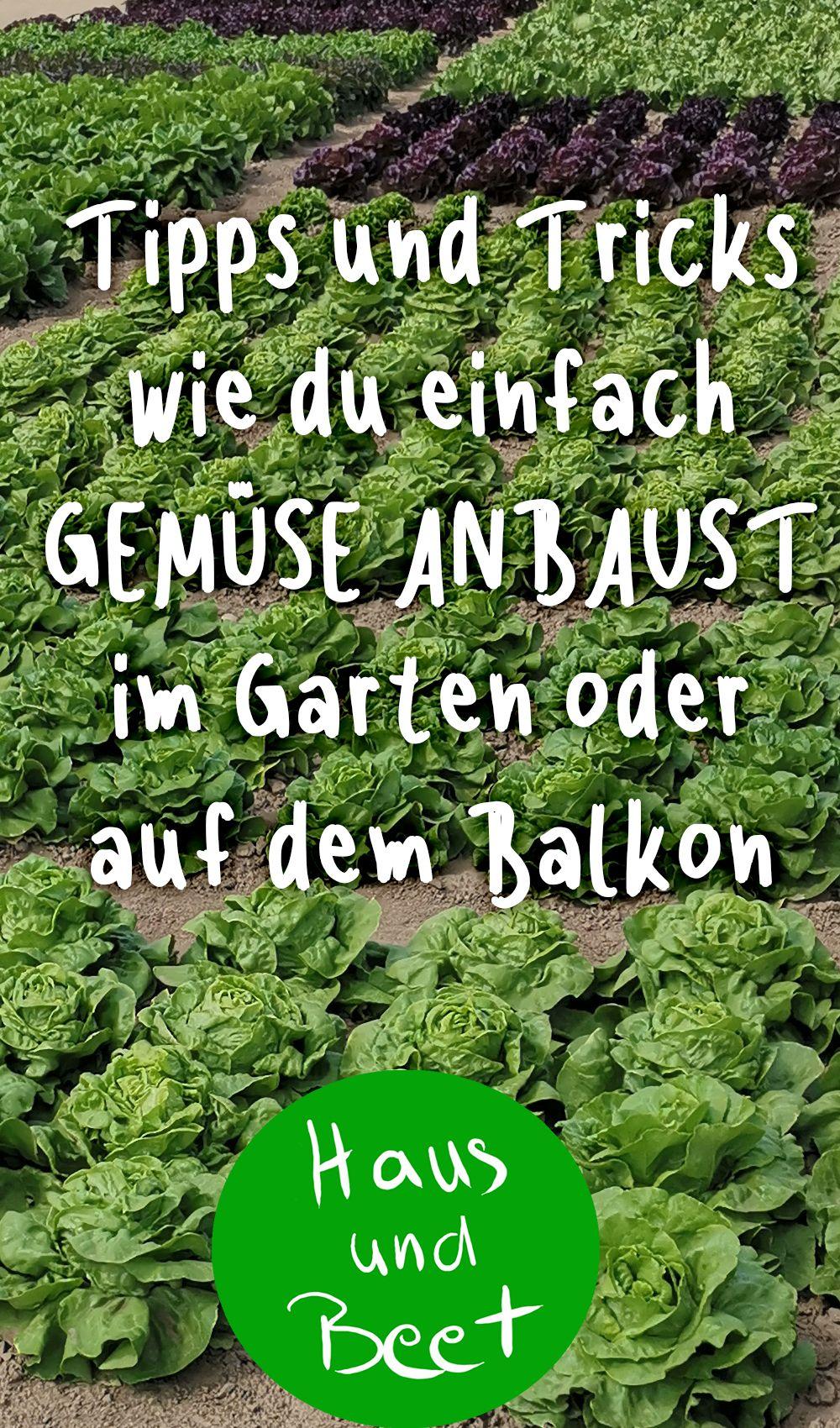 Gemuse Anbauen Haus Und Beet Selbstversorger Garten Gemuse Anbauen Garten Ideen Gemuse