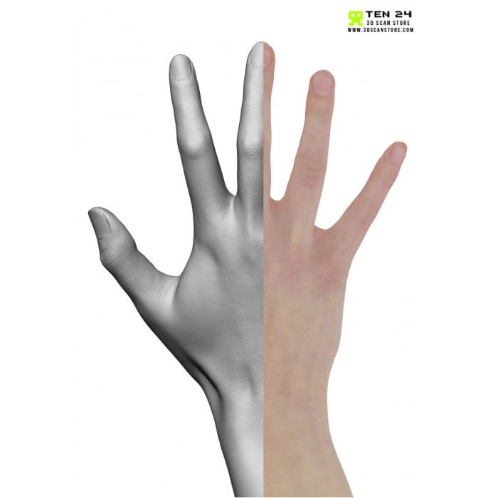 Female Hand 03 Fingers Relaxed | Pinterest | Finger and Anatomy