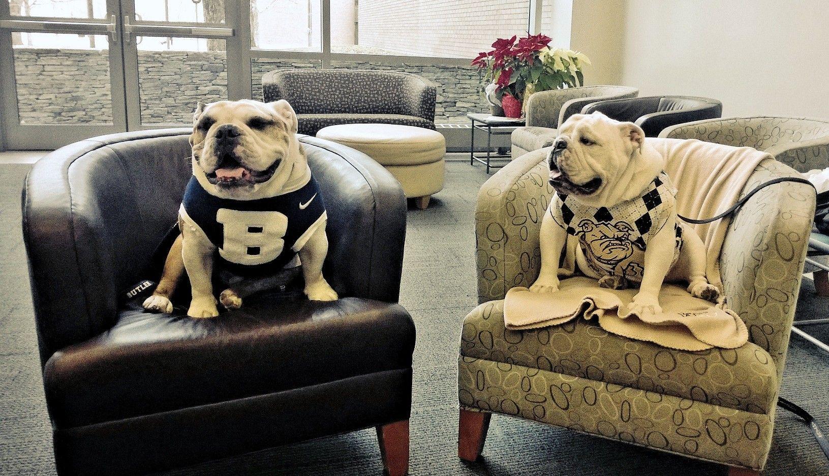 Butler Bulldogs mascot Butler Blue III meets Bryant
