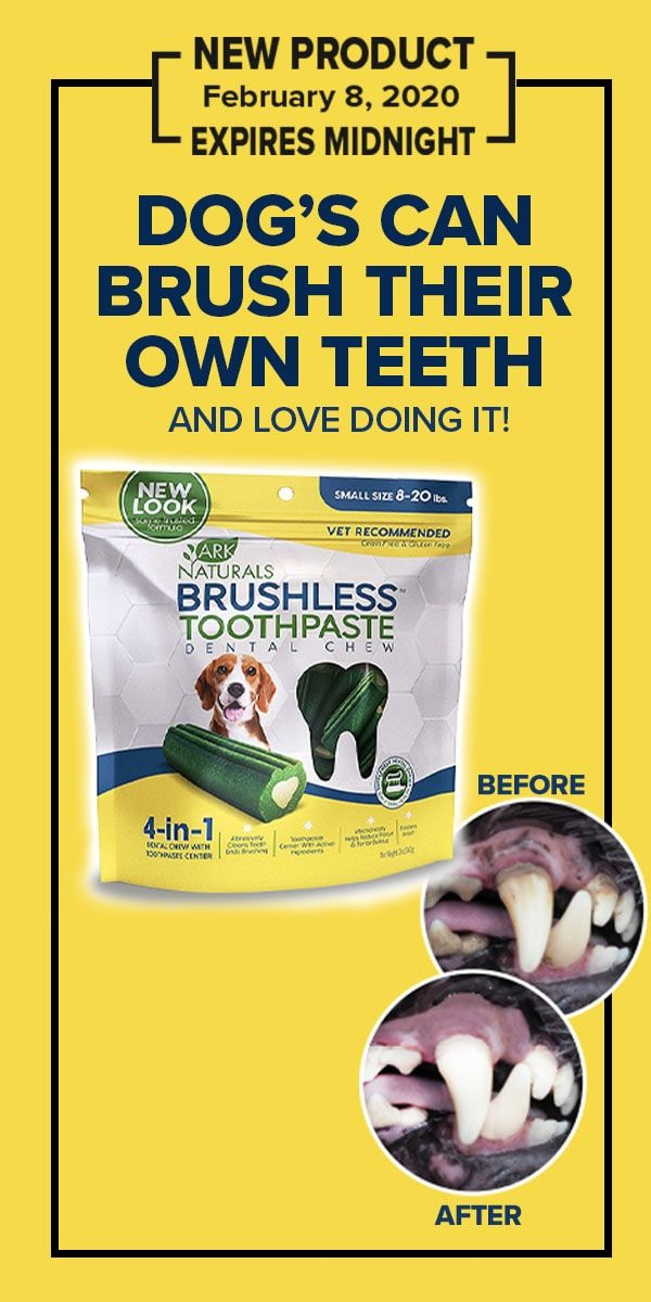 Brushless Toothpaste For Dogs Has An Abrasive Texture That