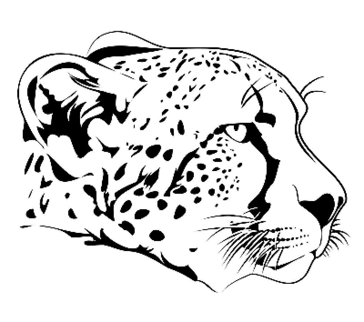 Cheetah Face Coloring Page Cheetah Drawing Zoo Animal Coloring Pages Puppy Coloring Pages