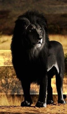 See These Melanistic Animals Gothic Life Rare Animals Weird Animals Animals