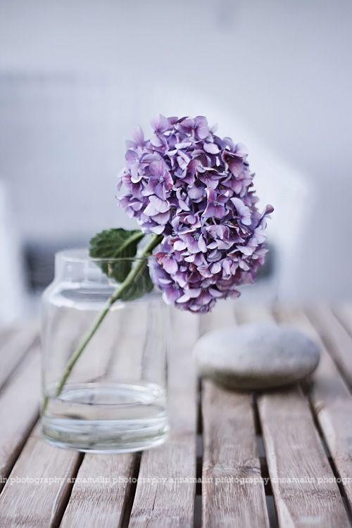 Pinterest Discover And Save Creative Ideas On We Heart It Beautiful Flowers Purple Flowers Hydrangea Purple