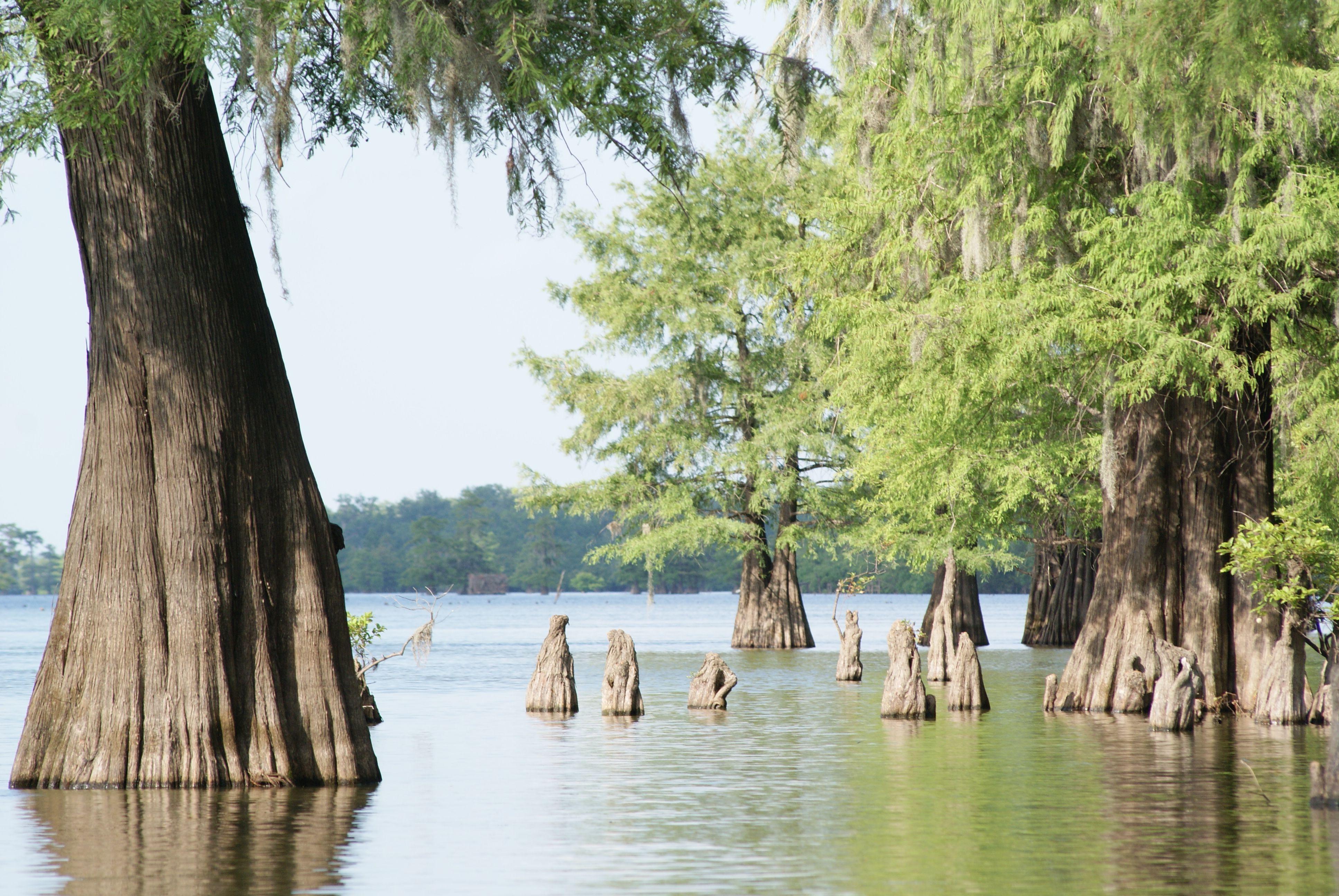 Saline Lake Louisiana Saline Lake Louisiana