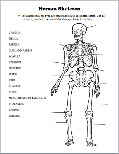Skeletal System Human Body Activities Human Body Worksheets Skeletal System Activities