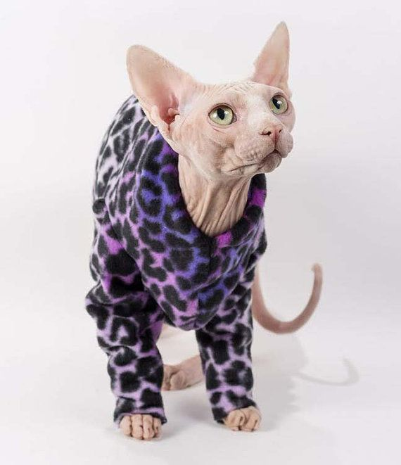 Sphynx Cat Clothes For Sale