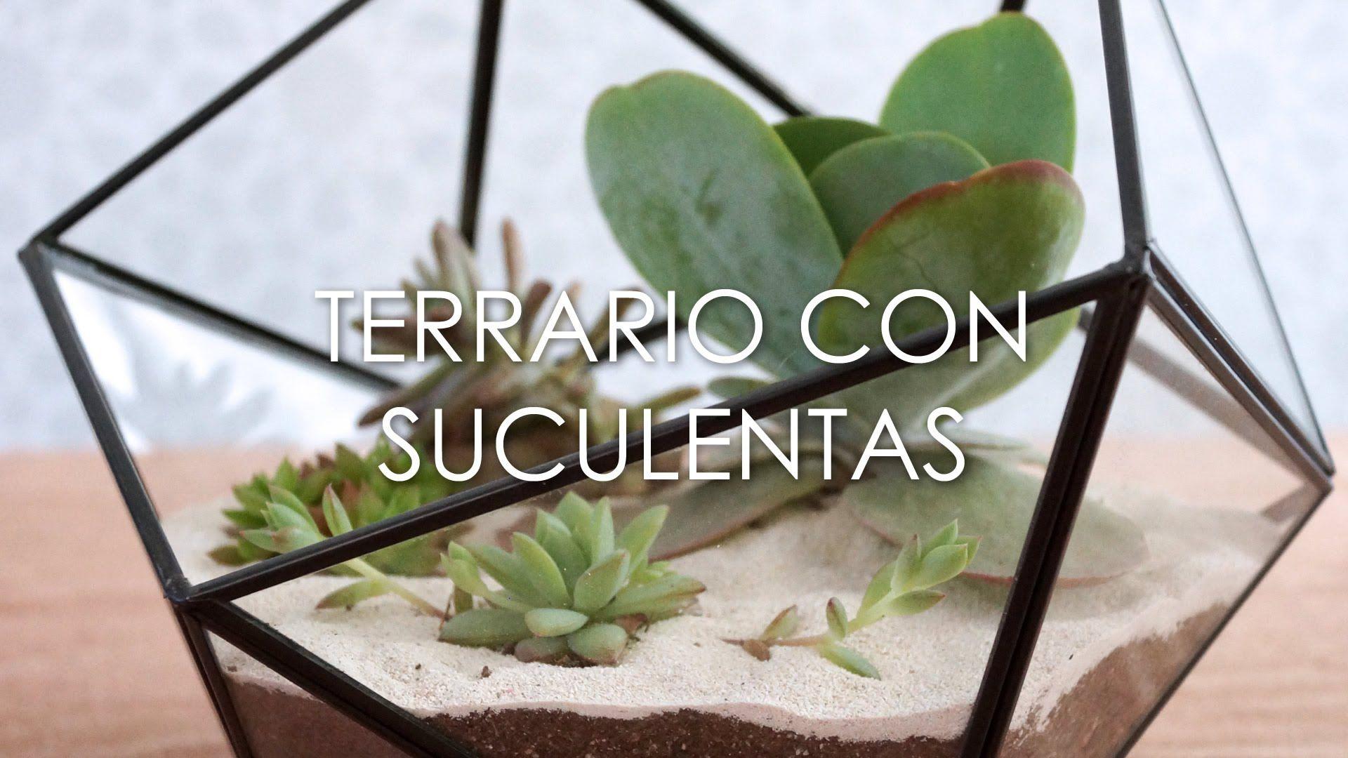 Diy Cómo Hacer Un Terrario De Suculentas Youtube Como Hacer Terrarios Terrarios Terrario De Suculentas
