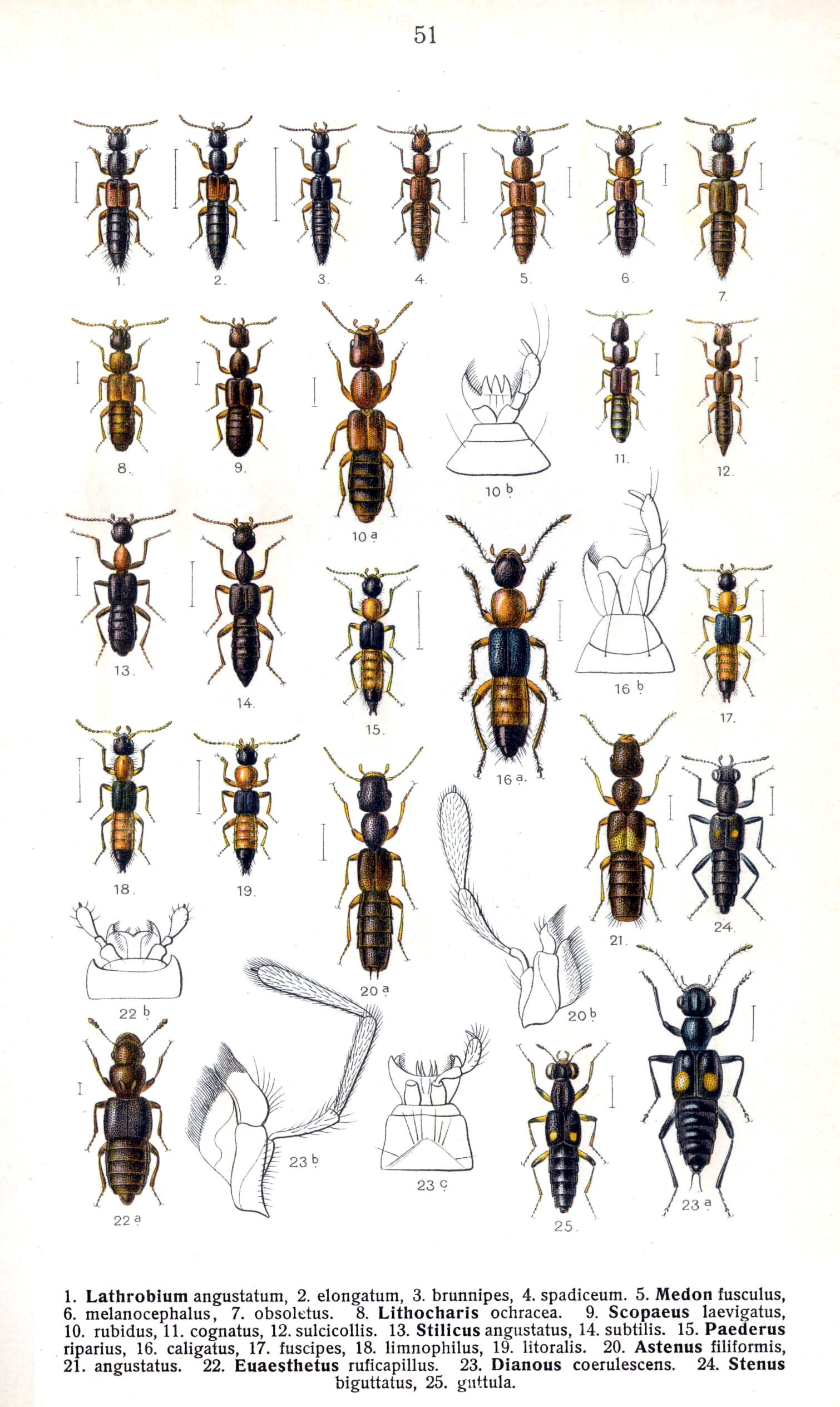 malvorlagen insekten in english  aglhk
