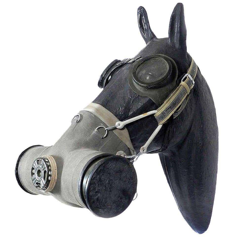 Pin On War Horse