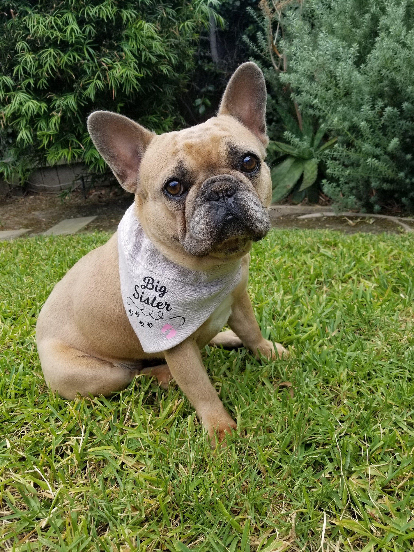 Dog Bandana Big Sister Baby Announcement Gender Reveal Etsy Dog Bandana Diy Dog Stuff Dogs