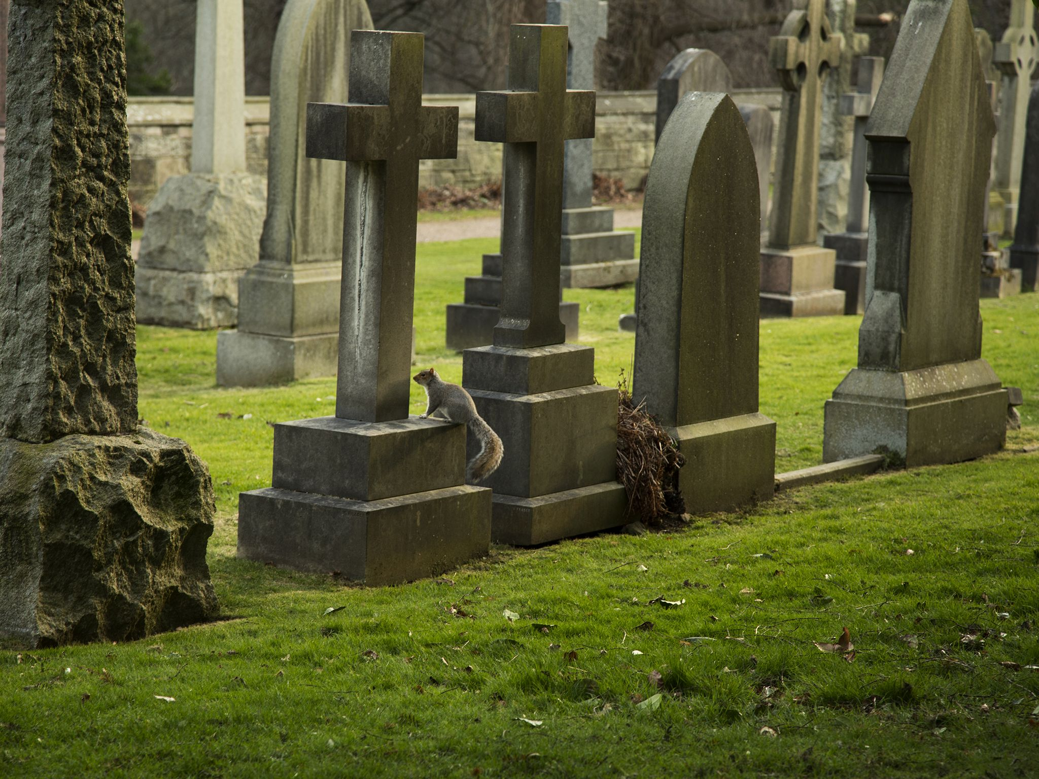 Sweden just opened its first atheist cemetery religion a graveyard free of any religious symbols has been opened in sweden to cater to the buycottarizona