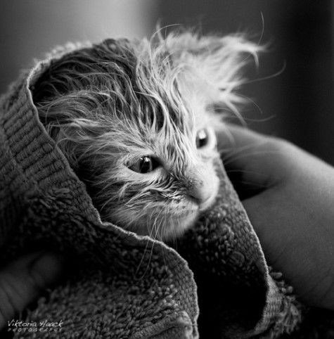A little frazzled