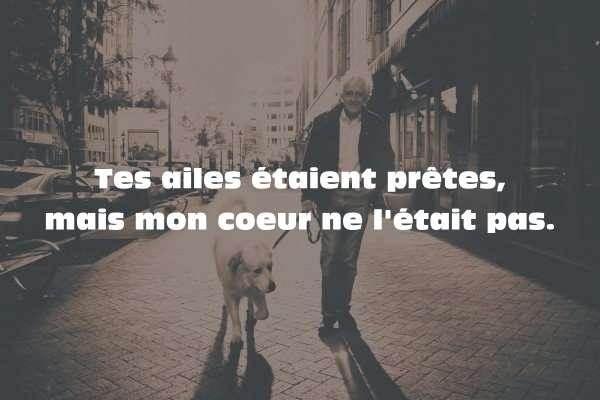 Citation Sur La Mort Dun Chien Citations Proverbes Sur