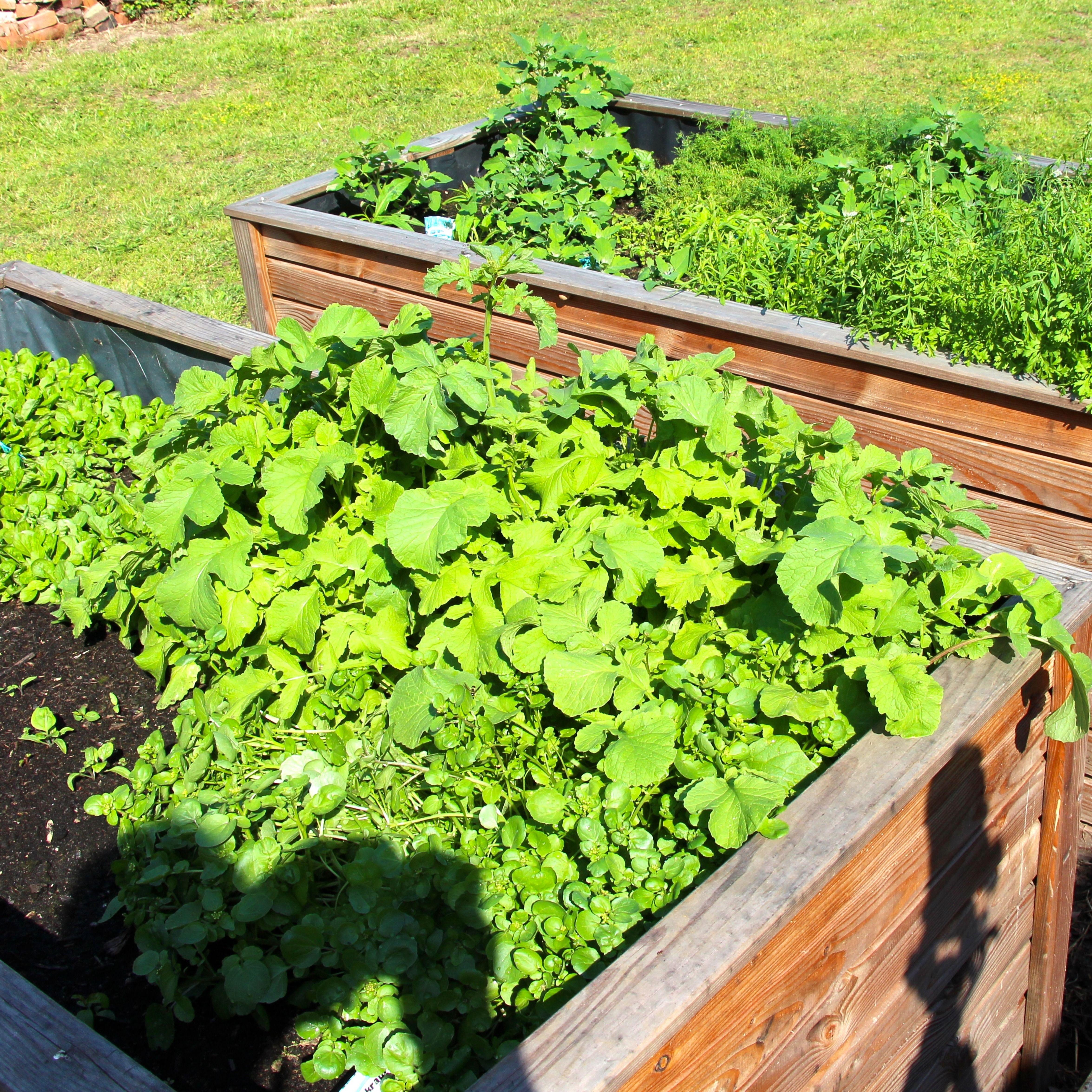 Krauter Pesto Aus Meinem Garten Krauter Fleisch Pinienkerne