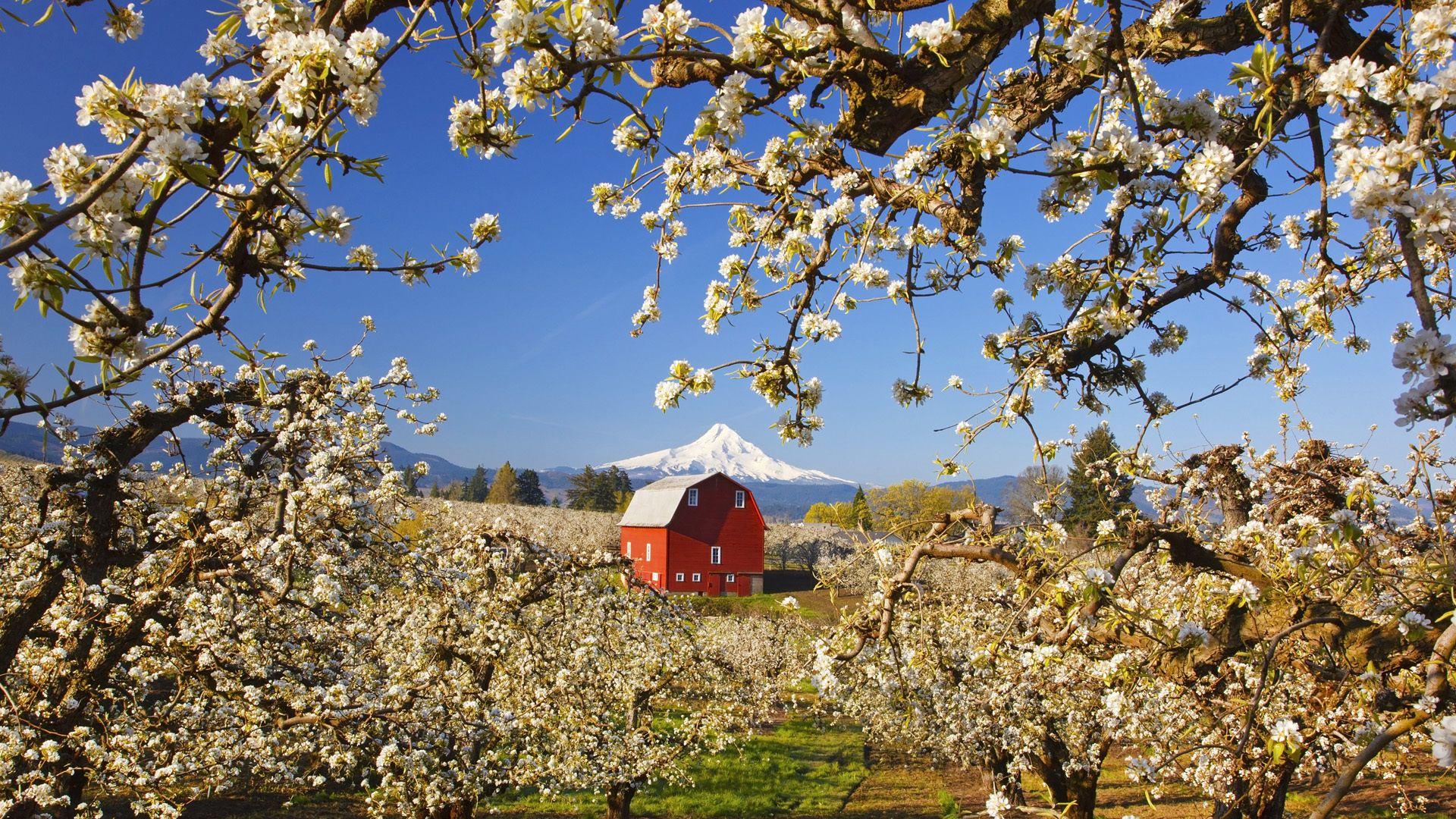 manzana, jardín, montaña, primavera, casa, paisaje