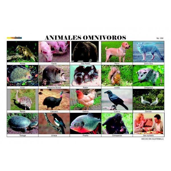 Imagenes Animales Omnivoros Para Imprimir Imagui Monse