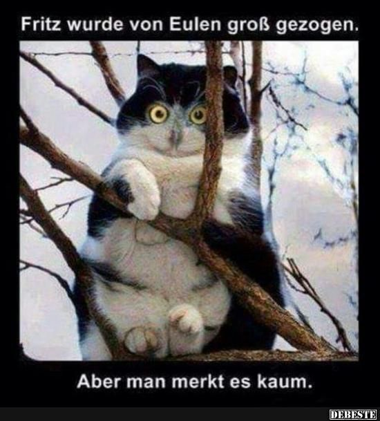 Besten Bilder, Videos und Sprüche und es kommen täglich neue lustige Facebook Bilder auf DEBESTE.DE. Hier werden täglich Witze und Sprüche gepostet! #katzen witzig
