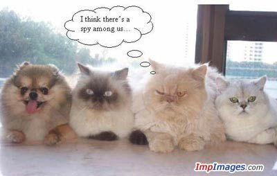 A spy in the group!